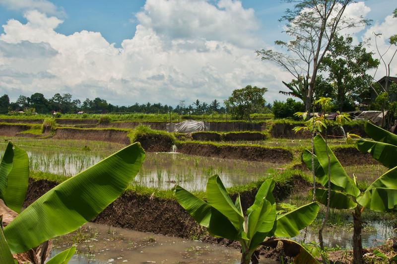 Bali - Ubud walk (24 of 31)