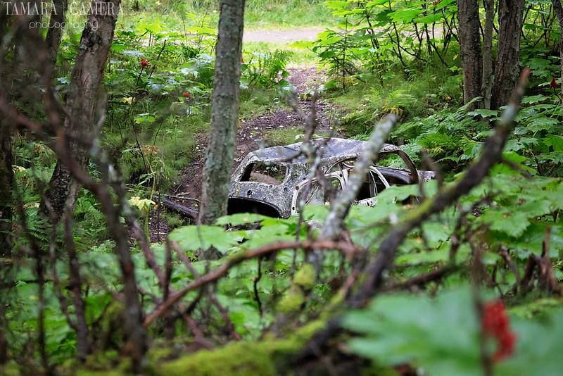 Kincaid Park Car-4.jpg