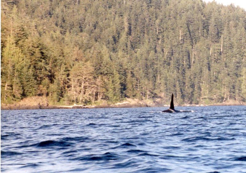 Orca027.jpg