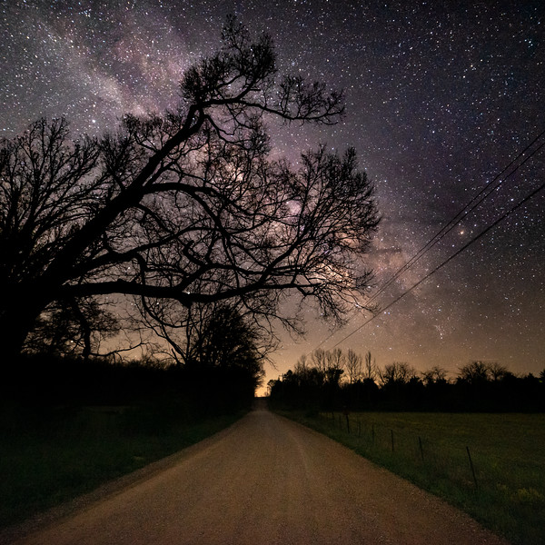 Branches over a country road at night