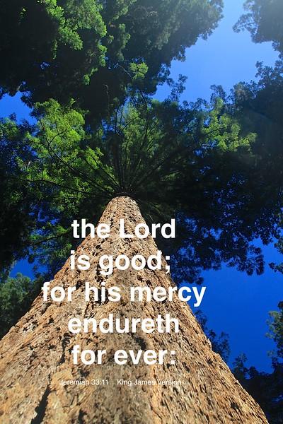 Jeremiah 33-11 Ph 1 .jpg