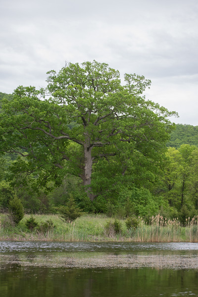 NJ-Kayaking Wallkill Refuge (67 of 217).jpg