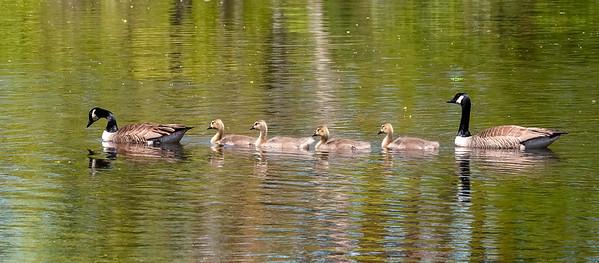 Spring and Summer Birding 2020