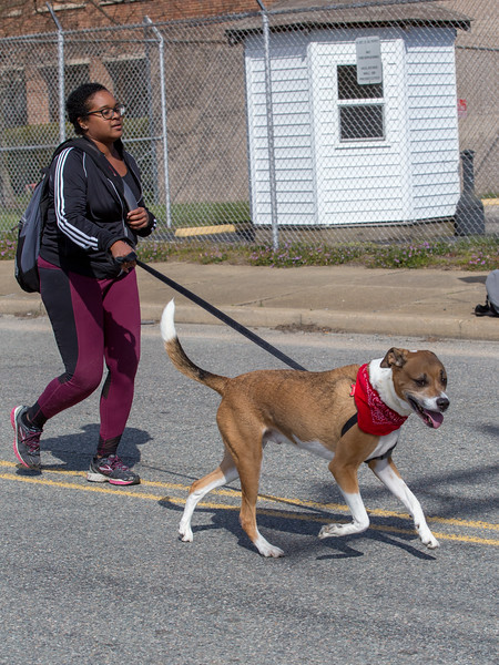 Richmond Spca Dog Jog 2018-734.jpg