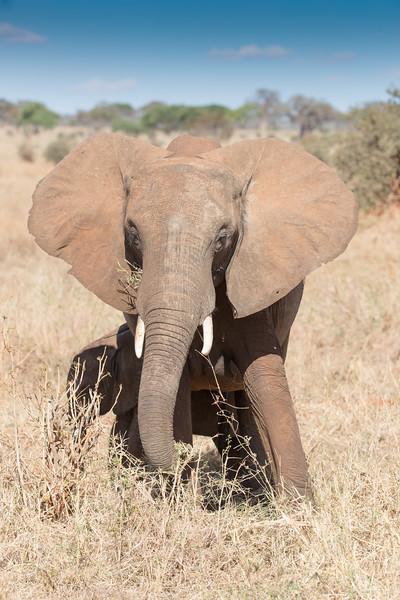 Africa - 102016 - 7598.jpg