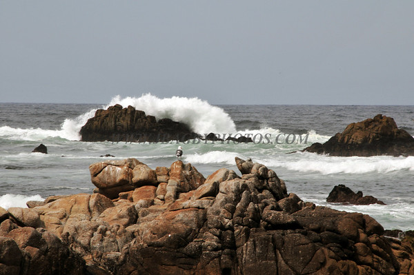Pacific Grove Calif.