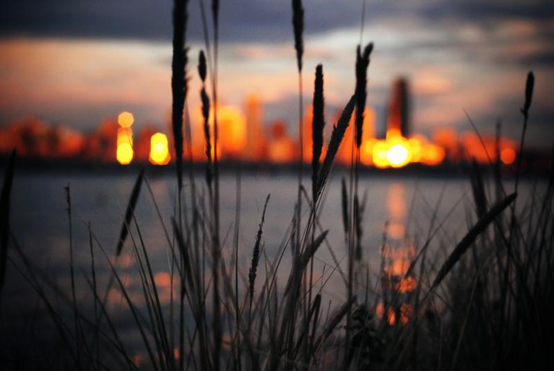 seattle winter sunset reeds forward LRG.jpg
