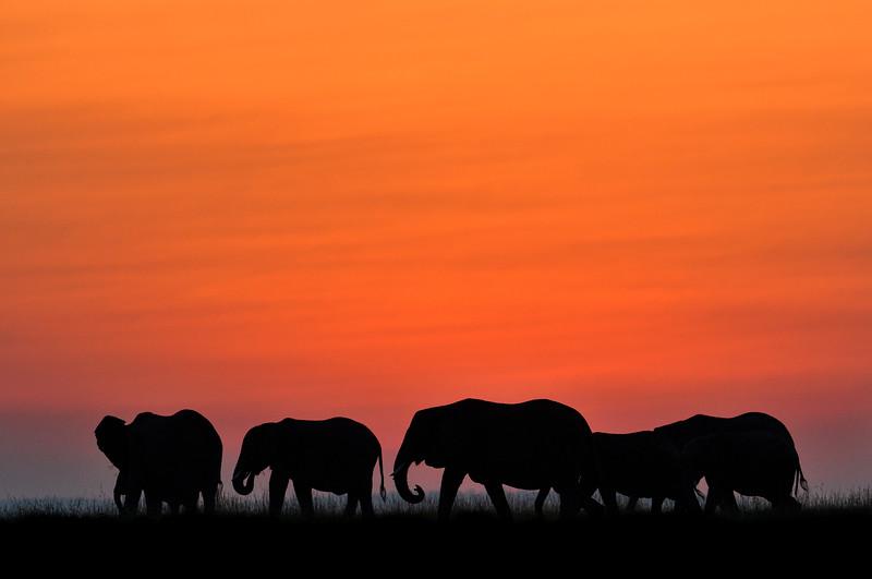 Golden-hour-orange-elephants-masaimara.jpg
