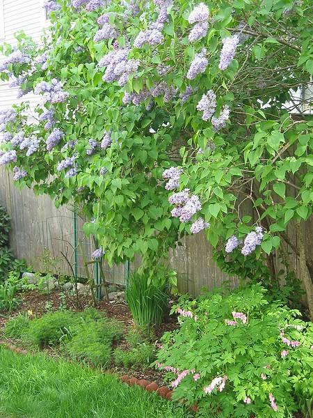 garden-2004-05-0217_std.jpg