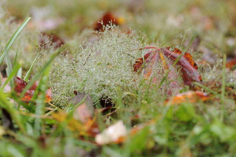Morning dew after a rainstorm