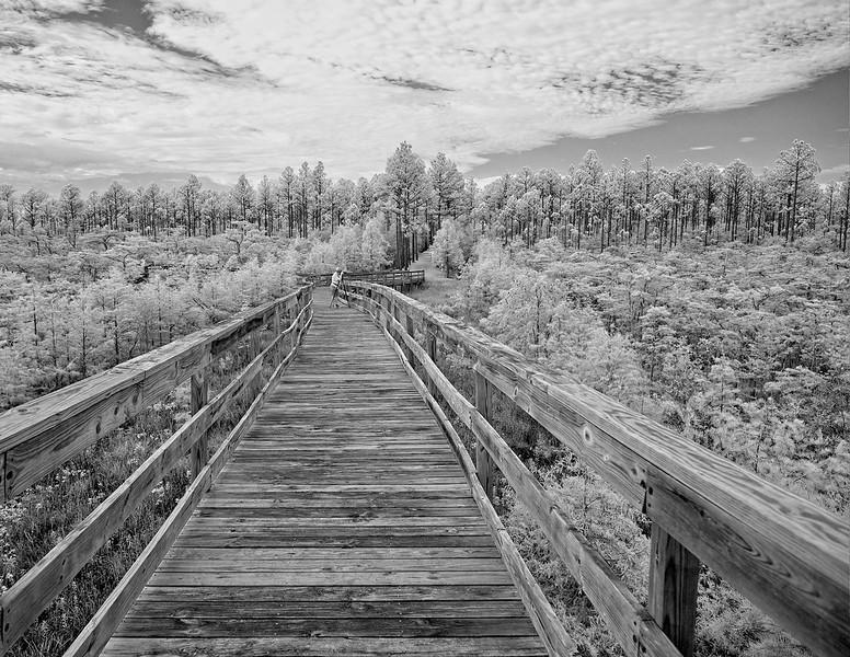 winterwonderland-copy.jpg