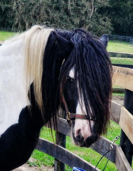 09.28.13~Gypsy Gold Horse Farm