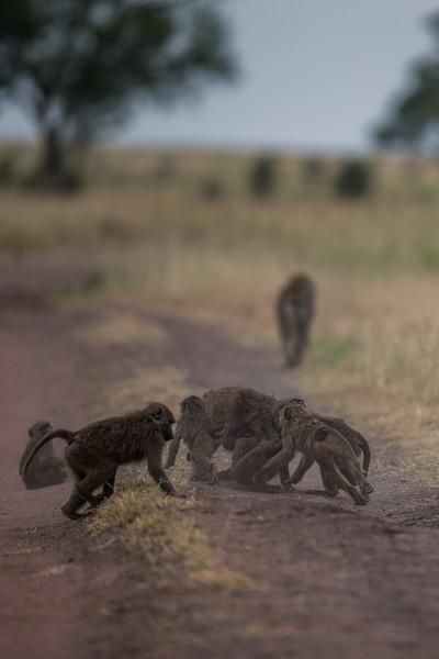 Tanzania_Feb_2018-1137.jpg