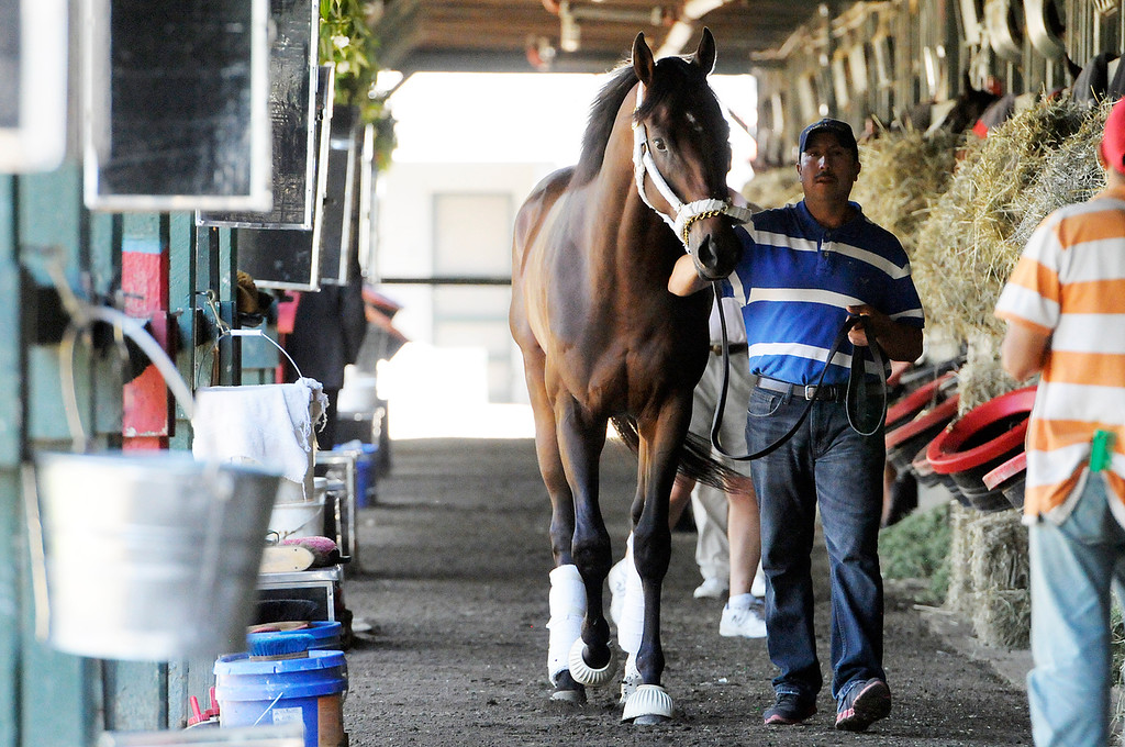 . Trainer Shug McGaughey shipped Kentucky Derby Winner Orb to Saratoga on Sunday morning, as groomsman Crisanto Maldonado walks him in the barn, from Fair Hill Training Center near Elkton, Md. Orb is set to run potentially in the Travers Stakes this summer.Photo Erica Miller/The Saratogian 8/11/13 spt_Orb3_Mon