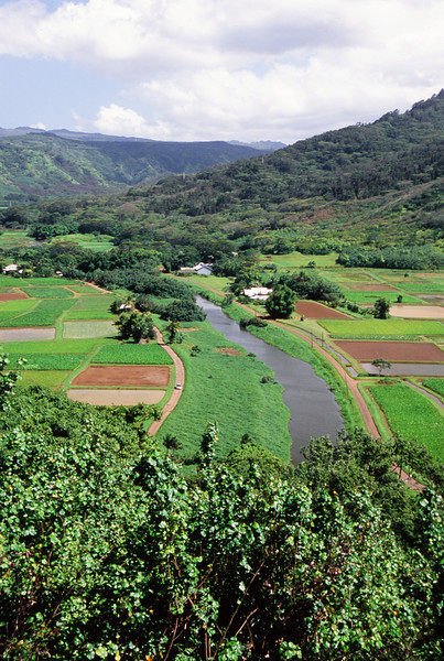 From Taro Fields to the Mountains