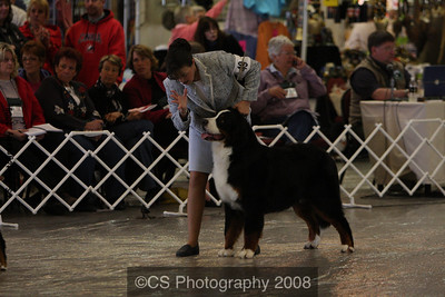 Futurity-Puppy Dog 6-9 mos-BMDCA 2009