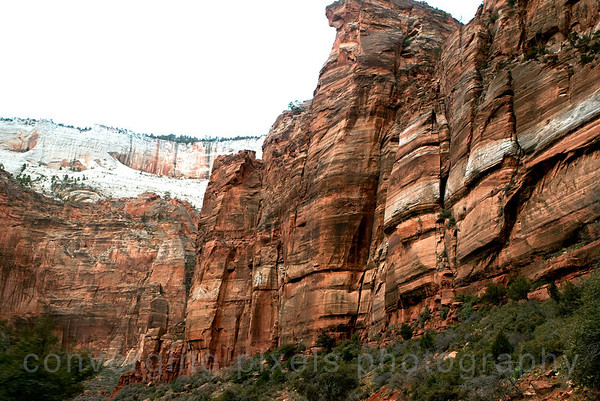 Zion National Park.  The east side of Zion is know as slickrock country as rocks are a mixture of white and varied tints of orange and brown. 1636