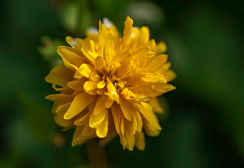 Spring flowers in the garden-83928.jpg