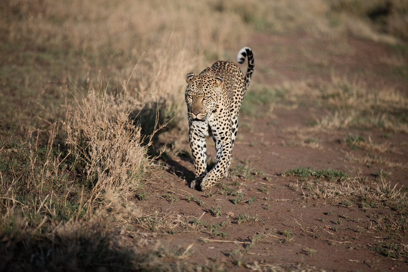 Africa - 101616 - 3771.jpg