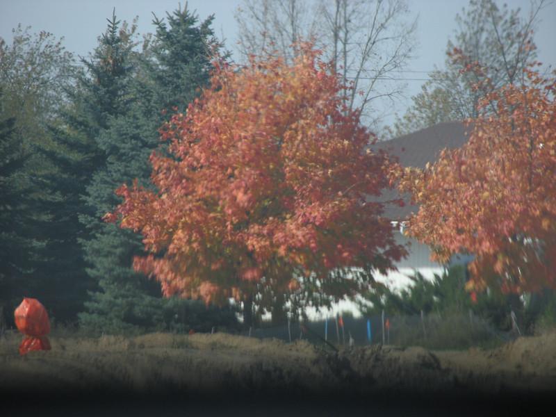 Fall pics 2008 012.jpg