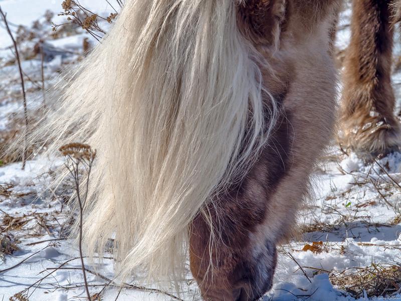 28 Mar 1 pony at Grayson xxx (1 of 1).jpg