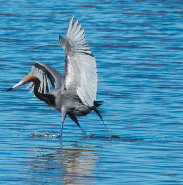 19-Sept North America Birds-9019.JPG