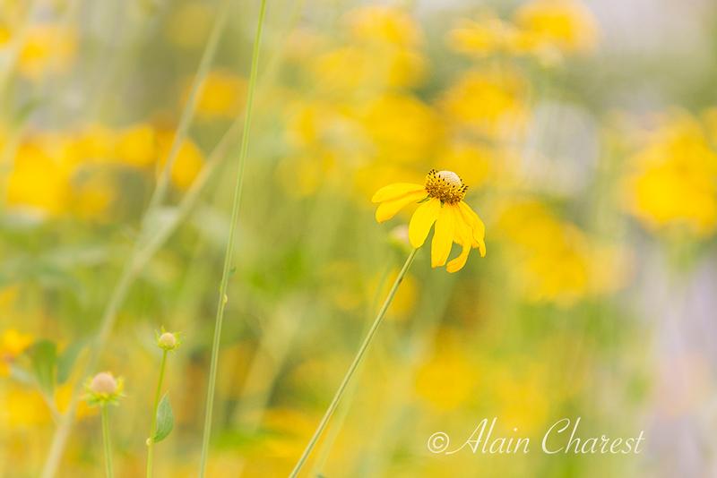 Fleur Fleur