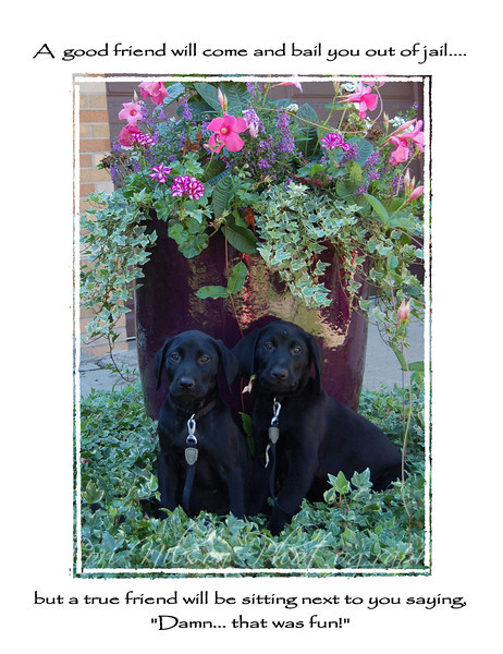 Trocki Pups