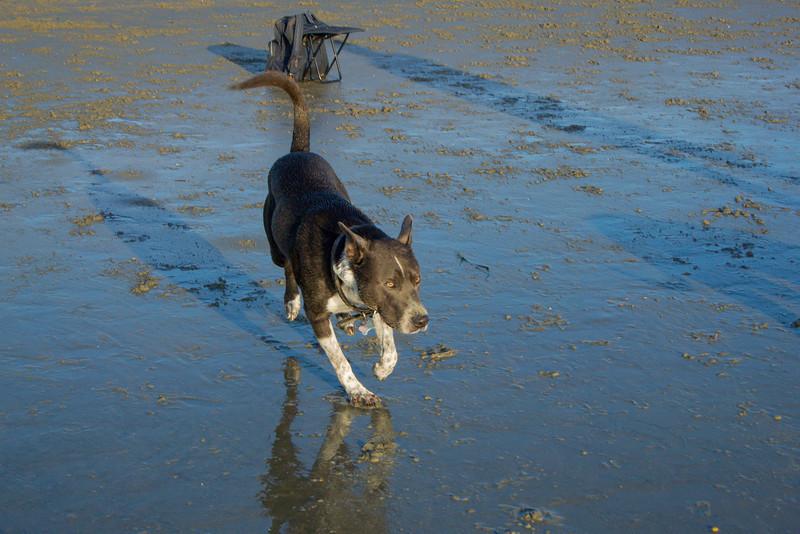 dogs_beach-36.jpg