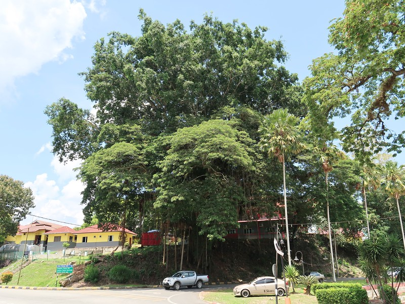IMG_5134-big-tree.jpg