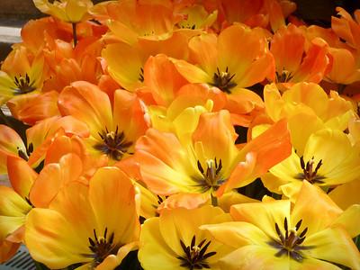 Flowers at Filoli