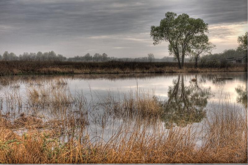 Tree Reflection in Marsh.jpg