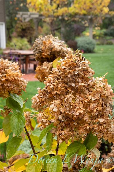Dietrick fall garden_2048.jpg