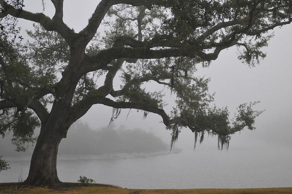 One Foggy Morn in 2007