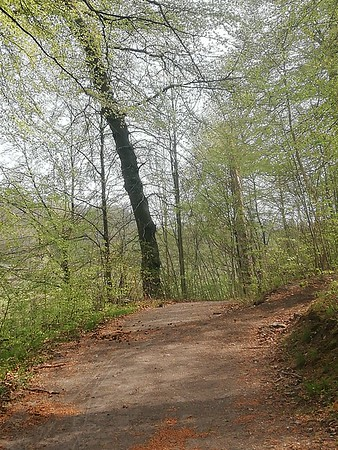240419 The stable and the woods