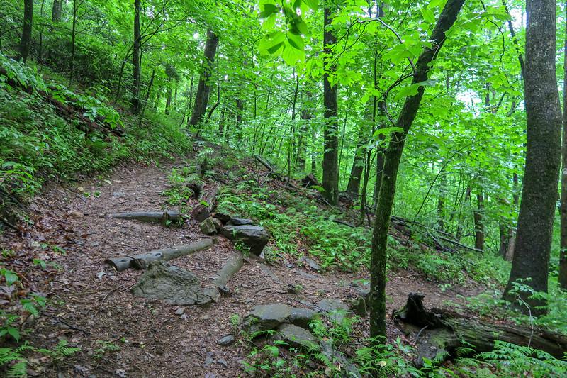 Barnett Branch Trail @ Upper Waterfall -- 3,600'