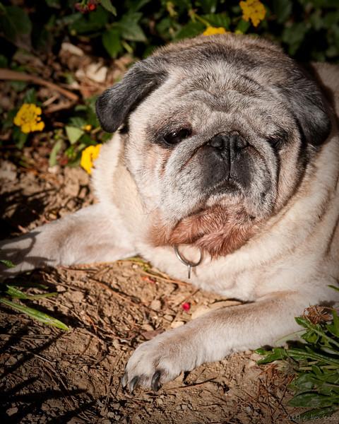Bubba - Sunny Day 2009