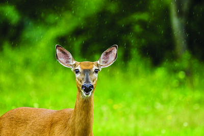 man-sets-up-fake-speed-trap-to-curb-smelly-deer-carcasses