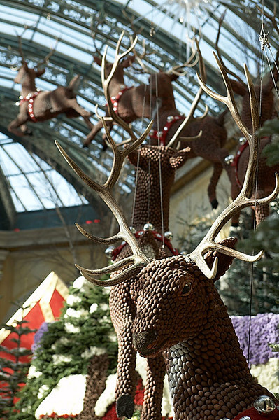 Reindeer in the Bellagio.