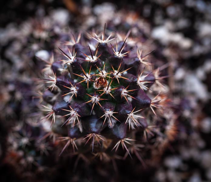 Cactus-7968.jpg