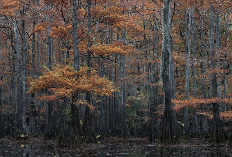 Cypress_Swamps_1117_PSokol-1108-Edit.jpg