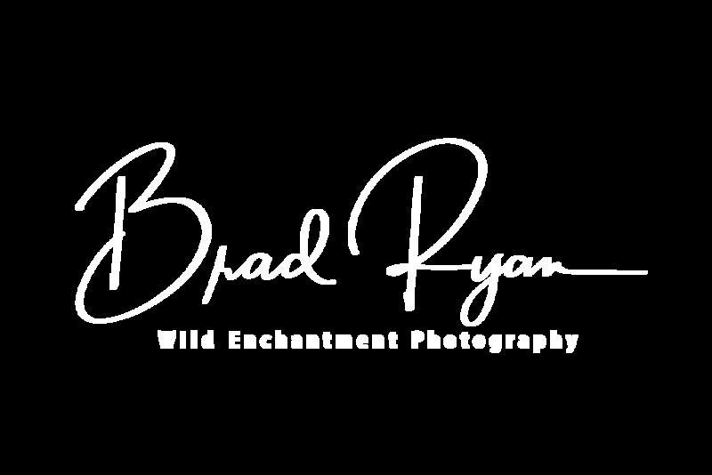 Brad-Ryan-white-high-res.png