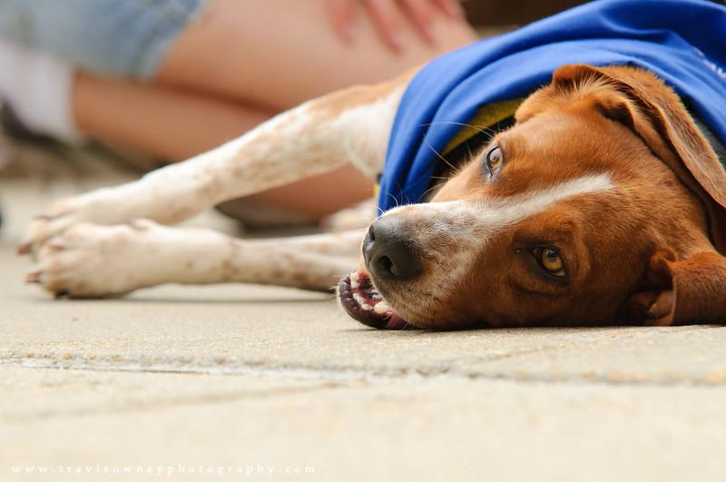 20110514 PetSmart Adoption Event-18.jpg