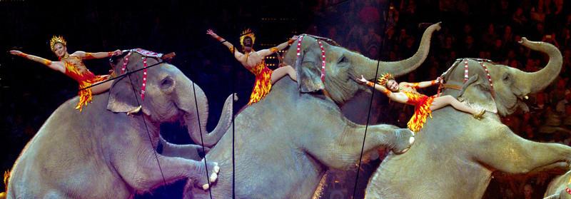 elephantsonhindlegswithriders6.jpg