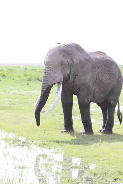 Kenya 2019 #2 973.JPG