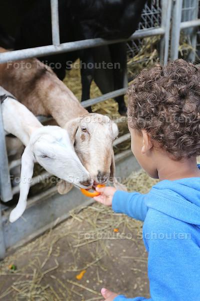 Dierendag - Groentebuffet bij stadsboerderij de balijhof - Jayden geeft paprika aan de geiten - ZOETERMEER 4 OKTOBER 2015 - FOTO NICO SCHOUTEN