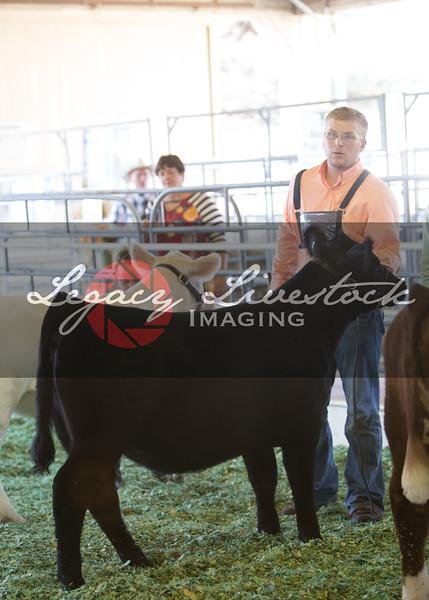 Prospect Heifers
