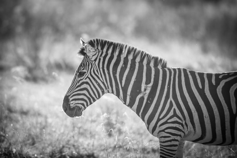Botswana_June_2017 (1481 of 6179).jpg