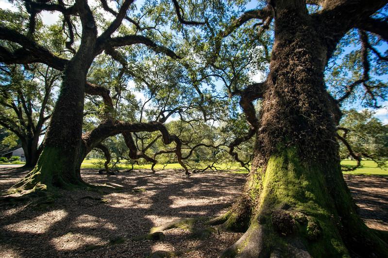 Oak Alley (Louisiana)