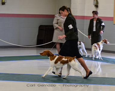 American Brittany Club Eastern Futurity March 2012